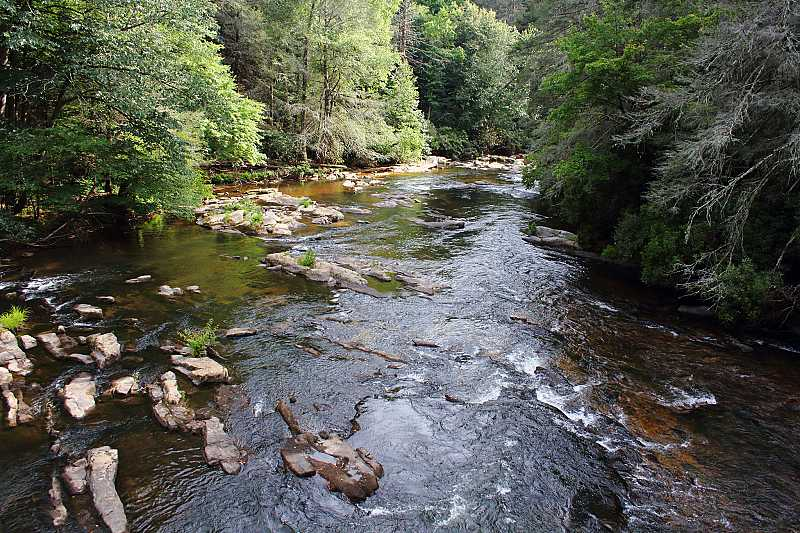 Toccoa River full of Trout Fishes